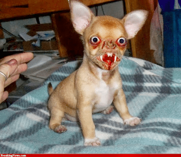 Ugly Mutts: The Dogs That Look Really Bad