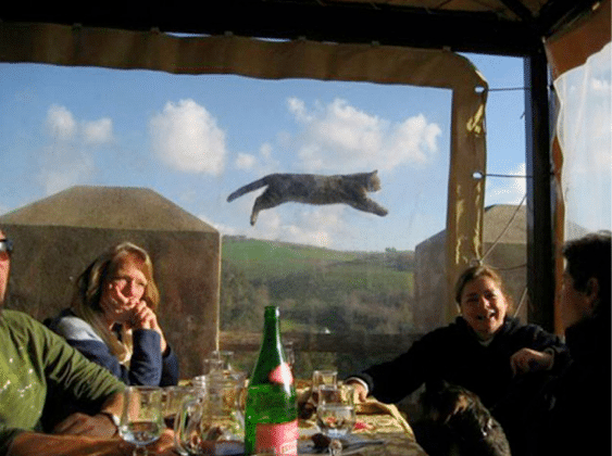 Most Outstanding Animal Photo Bombs