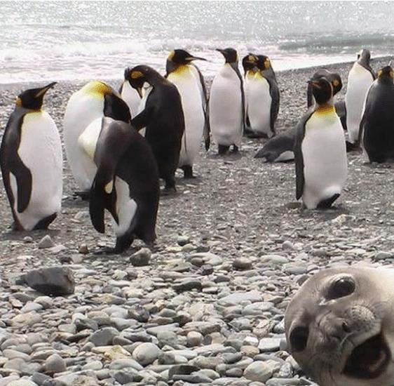 Outstanding Animal Photo Bombs