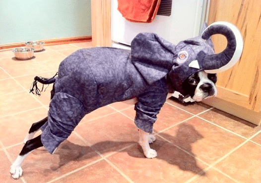 The Best and Worst Pet Halloween Costumes