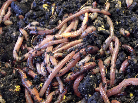 The Strangest Jobs and Worm Picker