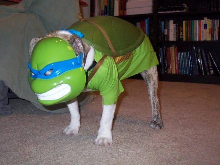 Just a Dog in A Costume