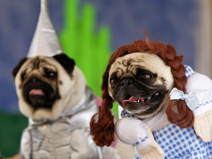 & Best Dog Costume Ideas