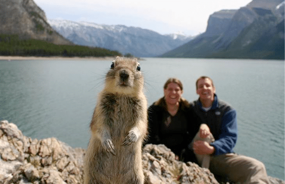 The 10 Most Outstanding Animal Photo Bombs