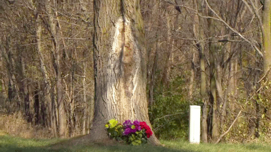 The Strangest Things Found in Trees
