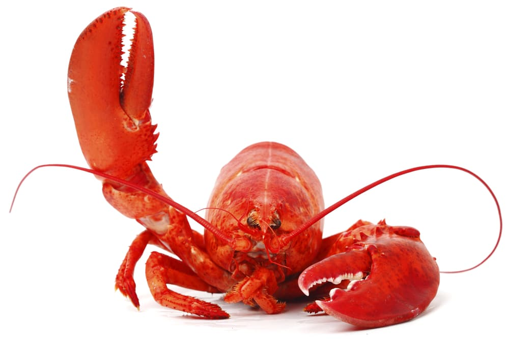 THE UNEXPECTED CLAW: 6 LOBSTER TREATS YOU HAVE TO TASTE TO BELIEVE