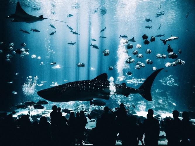 big aquarium with a big fish